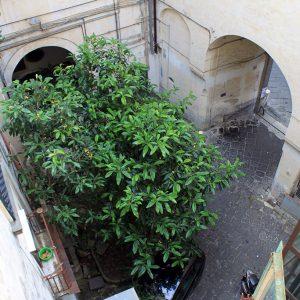 Cortile palazzo / Palace backyard